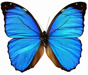 mariposacrop