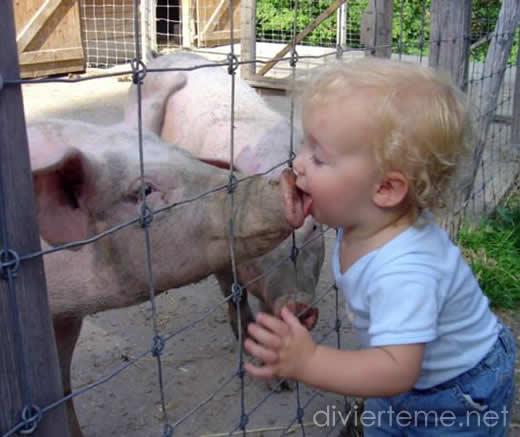 lindo-bebito-cerdo